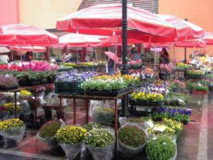 The large square in the Lower Town, Zagreb, is where locals like to relax while sipping coffee in one of the many cafes. In Upper Town there is a colorful flower market in Kaptol Square.