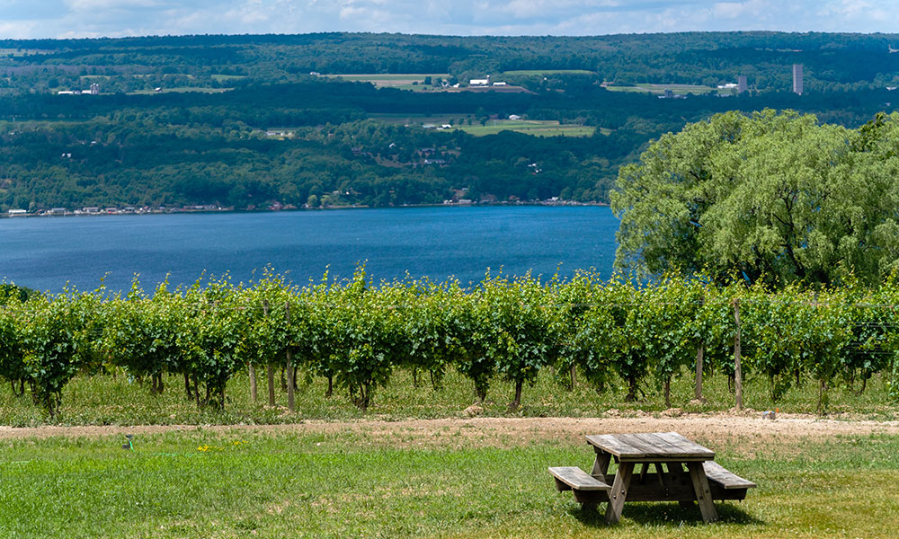 Wagner's Vineyards on the shores of Seneca Lake in the Finger Lakes