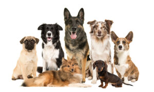 Read more about the article Trainer Helps Dogs Adjust to Owners' New Schedules