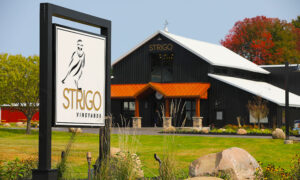 Read more about the article Strigo Vineyards: One Year Later