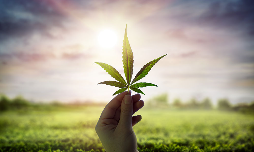 You are currently viewing Welcome to  'Cannabis Insider'