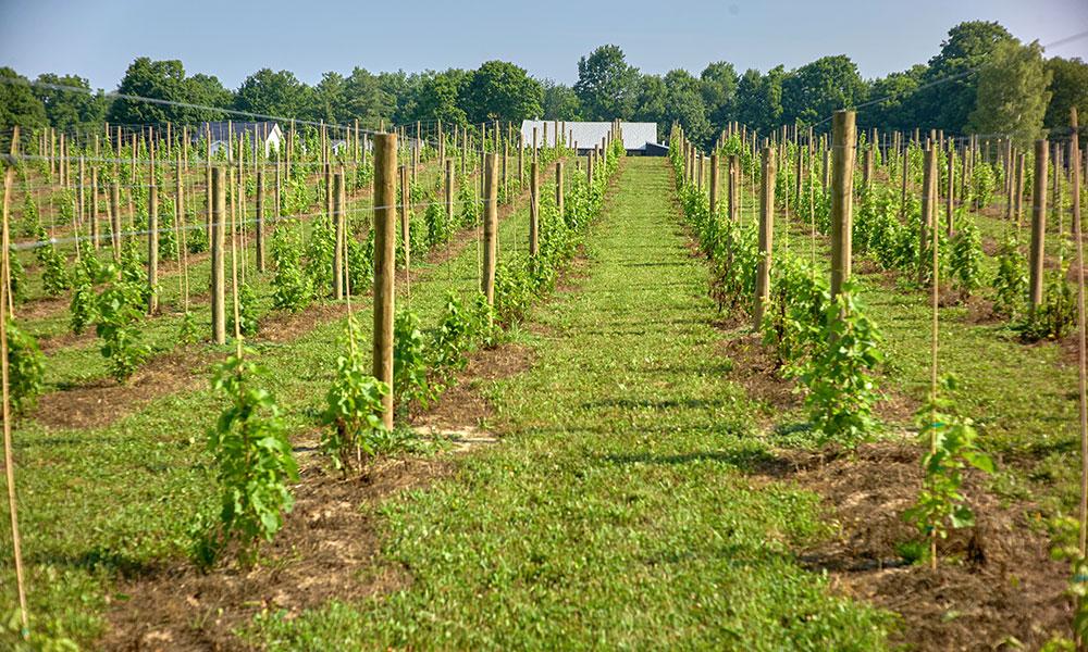 You are currently viewing CNY's Newest Vineyard