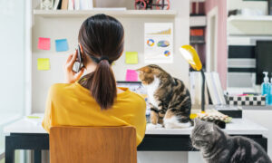 Read more about the article 'Is Working From Home More or Less Productive Than The Office?'